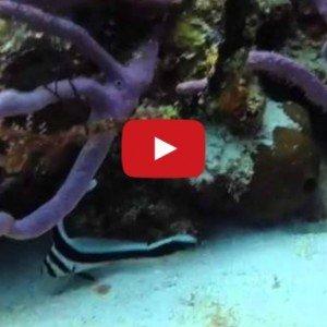 underwater video 300x300 1