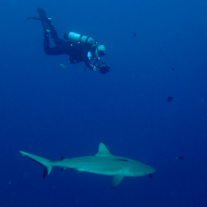 Palau2Jim&Shark400px