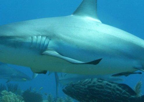 sharks 060 870x350