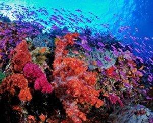 Fiji Niaa 1