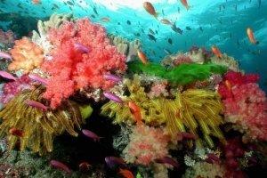 soft corals crinoids anthias