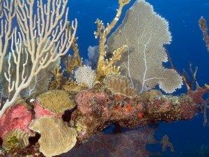 Belize 45